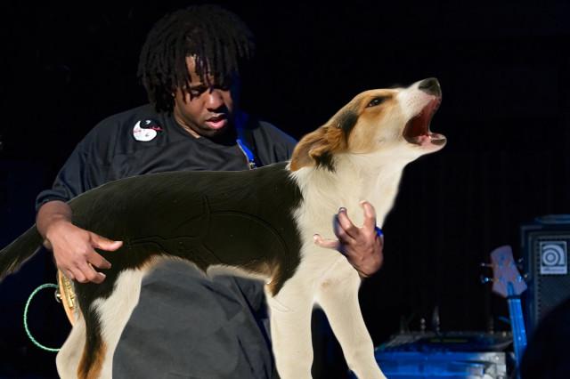 bassdog3